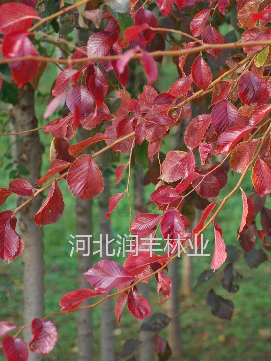红粉佳人 -太阳城国际_太阳城国际官网_太阳城国际注册