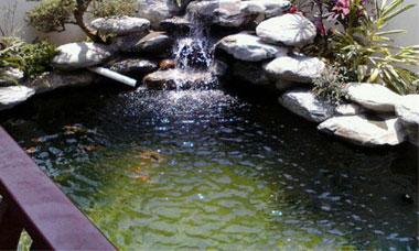 錦鯉池施工