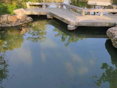 锦鲤鱼池设计