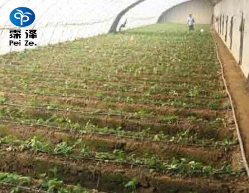 献县蔬菜水肥一体化