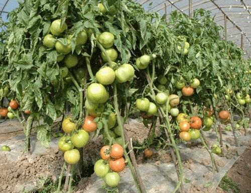 果树滴灌设备