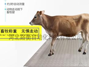 滄州畜牧秤